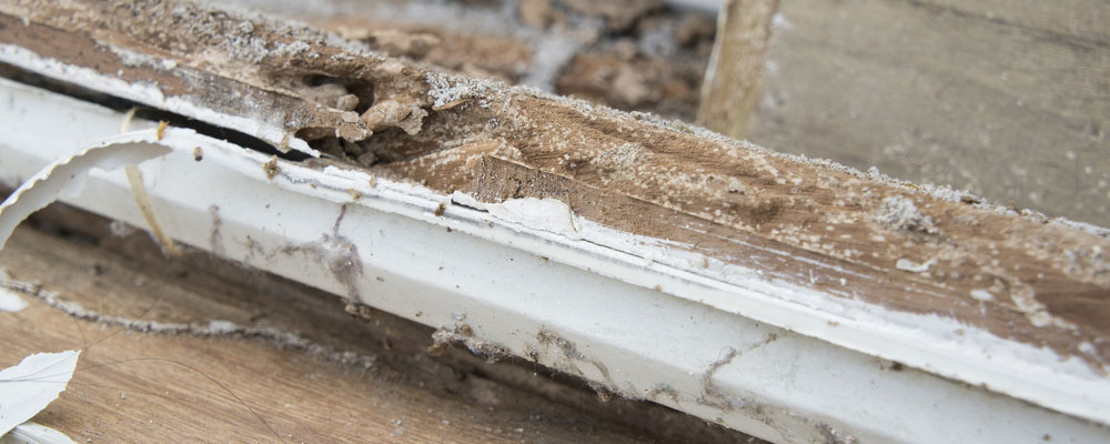 Sub Termite Treatment